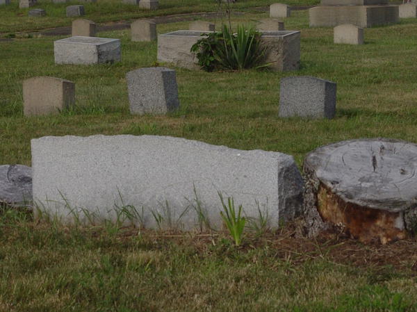 tree stump and graves